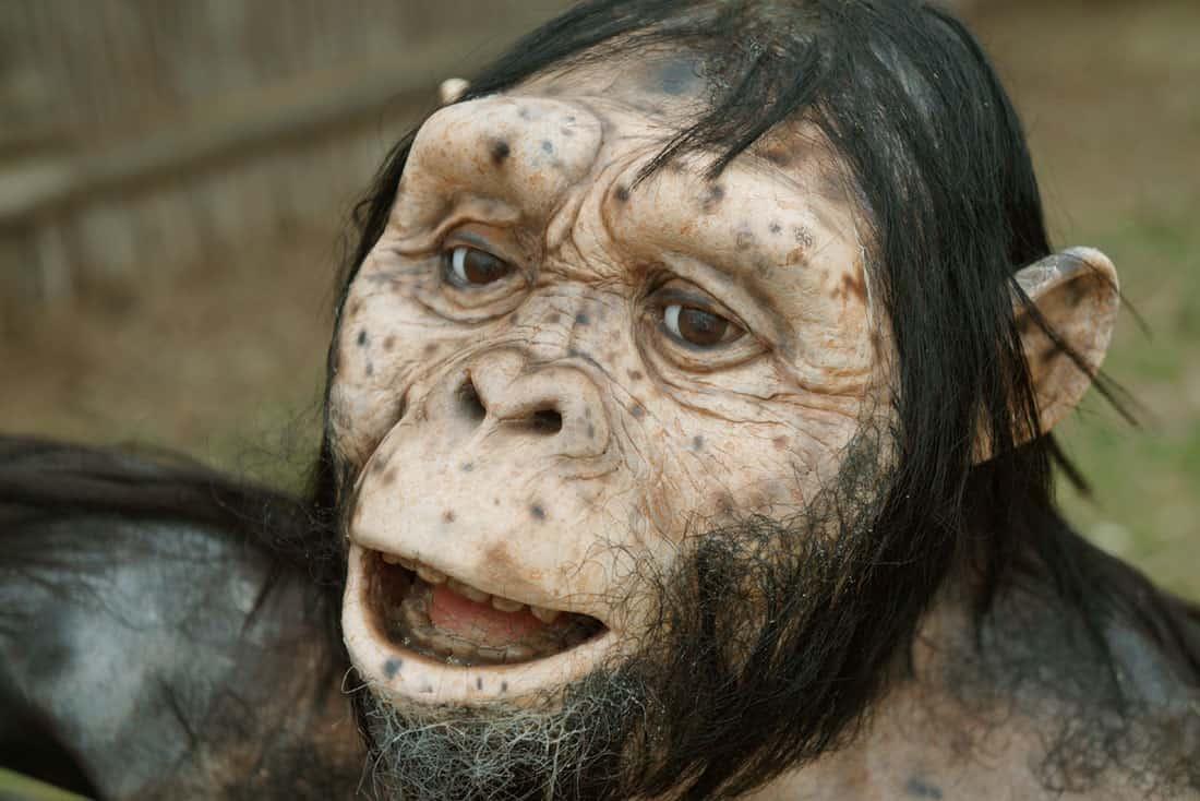 Australopithecus afarensis. Arqueoopinto. © Paleorama SL